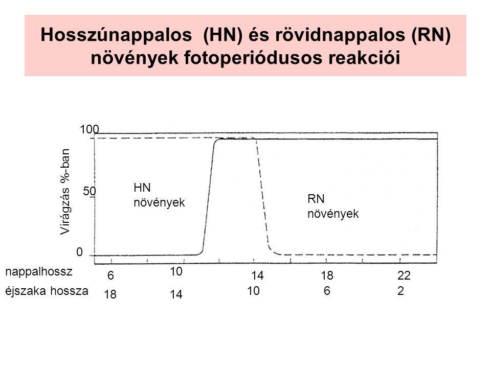 Hosszúnappalos (HN) és rövidnappalos (RN) növények fotoperiódusos reakciói