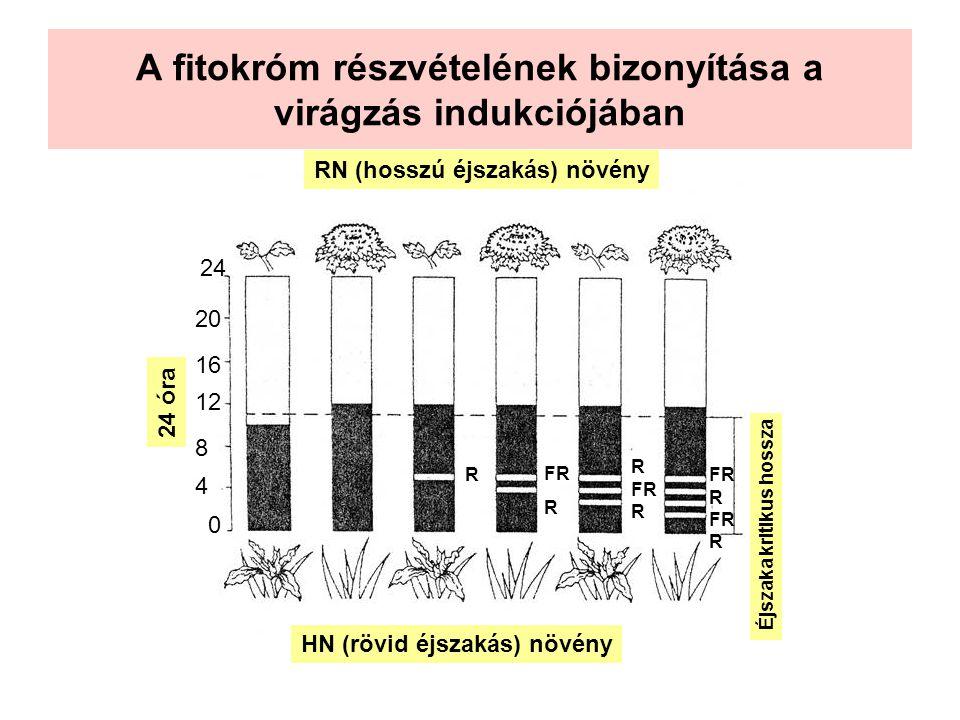 A fitokróm részvételének bizonyítása a virágzás indukciójában