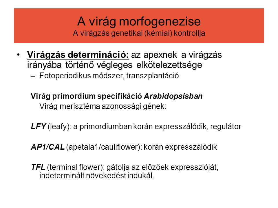 A virág morfogenezise A virágzás genetikai (kémiai) kontrollja
