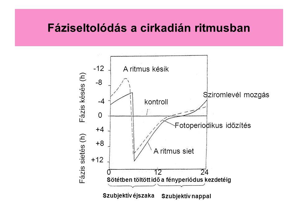 Fáziseltolódás a cirkadián ritmusban