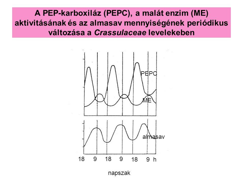 A PEP-karboxiláz (PEPC), a malát enzim (ME) aktivitásának és az almasav mennyiségének periódikus változása a Crassulaceae levelekeben