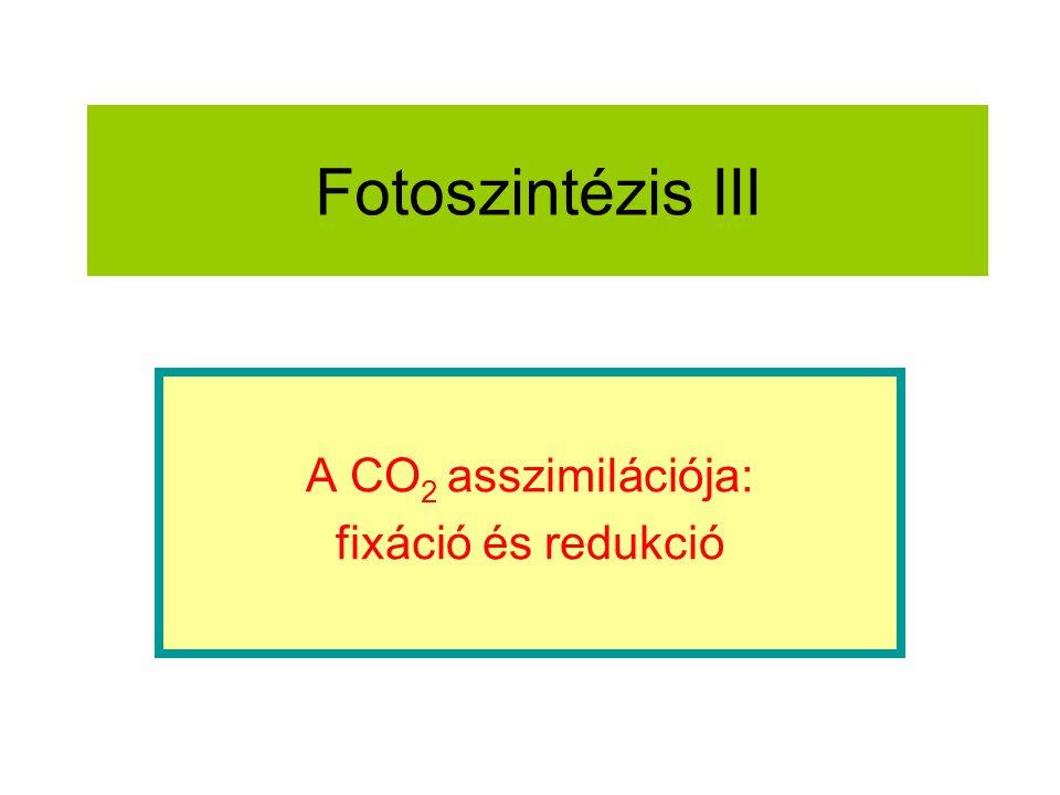 A CO2 asszimilációja: fixáció és redukció