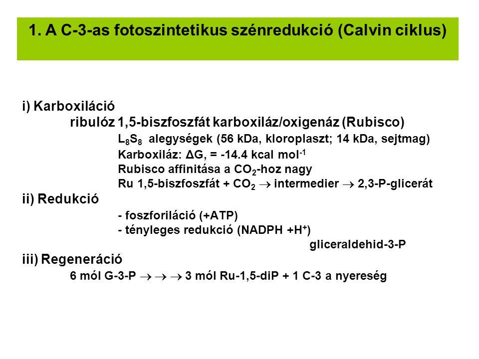 1. A C-3-as fotoszintetikus szénredukció (Calvin ciklus)