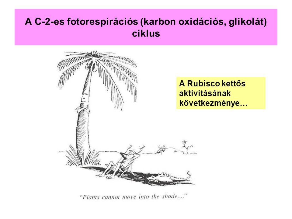 A C-2-es fotorespirációs (karbon oxidációs, glikolát) ciklus