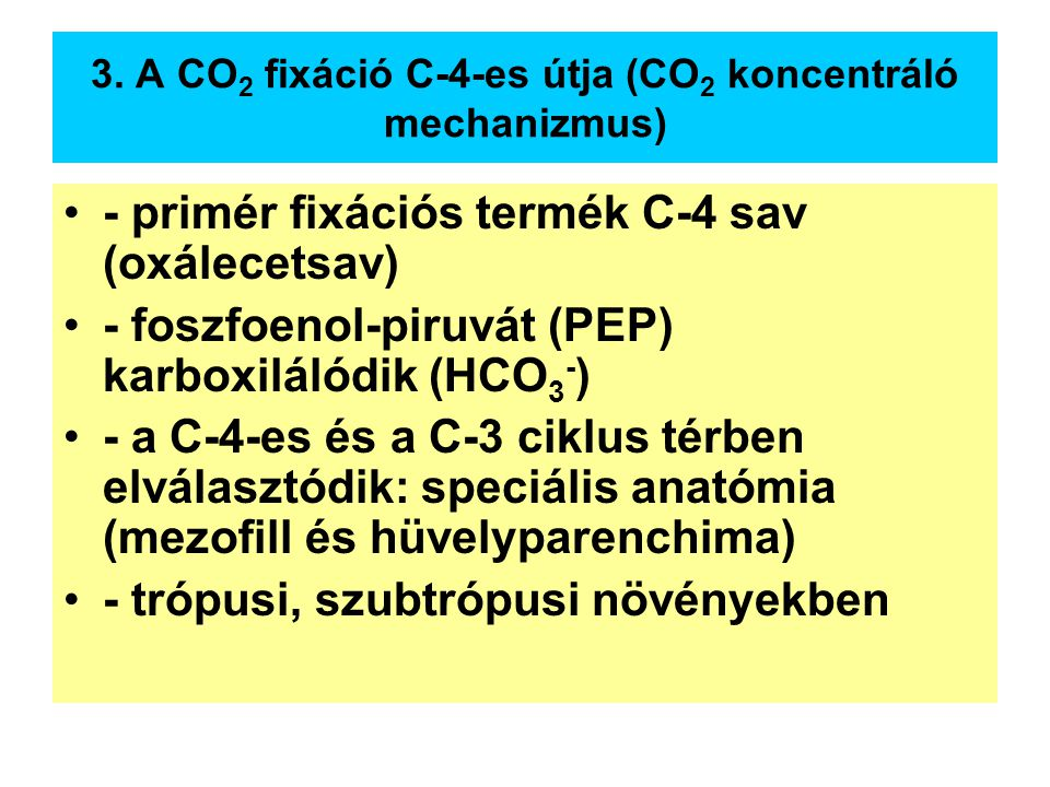 3. A CO2 fixáció C-4-es útja (CO2 koncentráló mechanizmus)