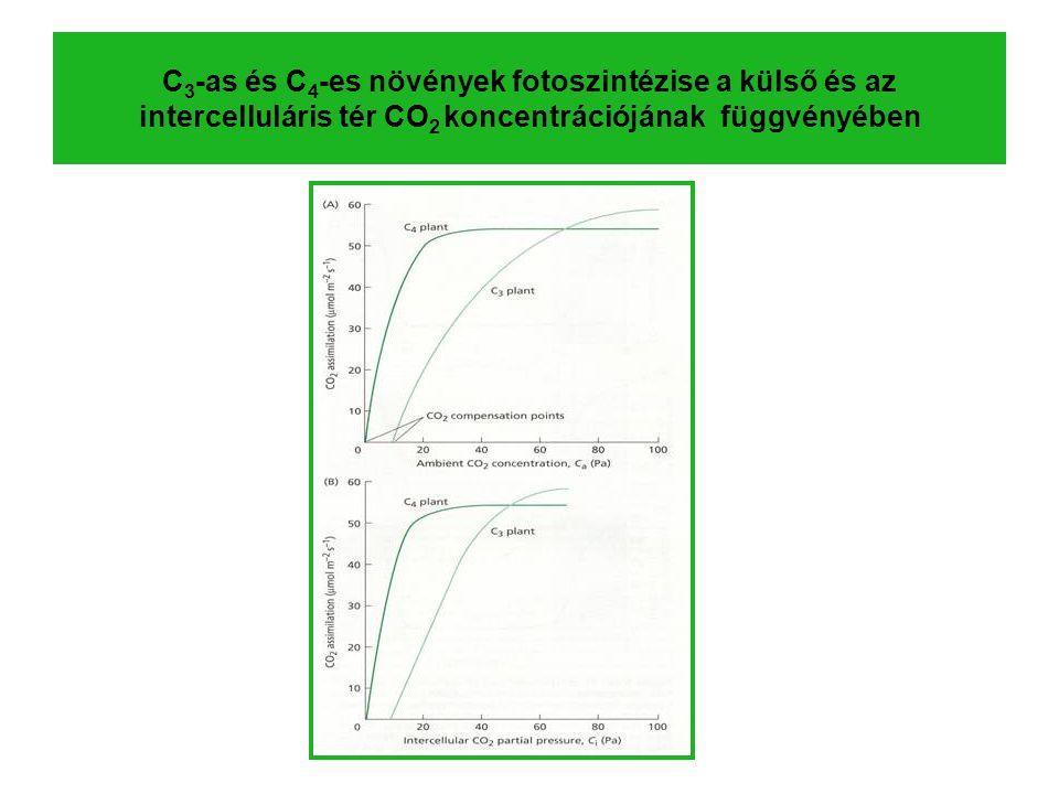 C3-as és C4-es növények fotoszintézise a külső és az intercelluláris tér CO2 koncentrációjának függvényében