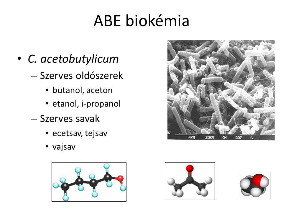 ABE biokémia C. acetobutylicum Szerves oldószerek Szerves savak