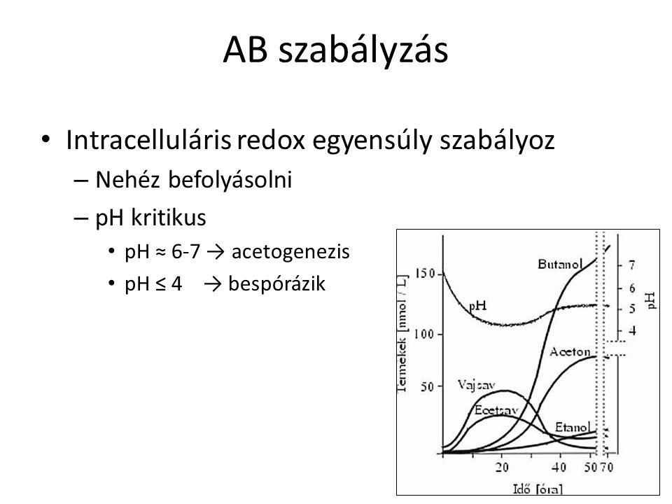 AB szabályzás Intracelluláris redox egyensúly szabályoz