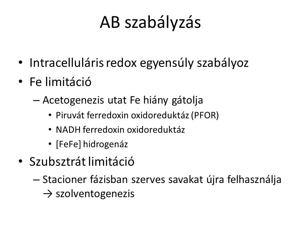 AB szabályzás Intracelluláris redox egyensúly szabályoz Fe limitáció