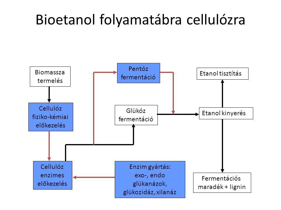 Bioetanol folyamatábra cellulózra