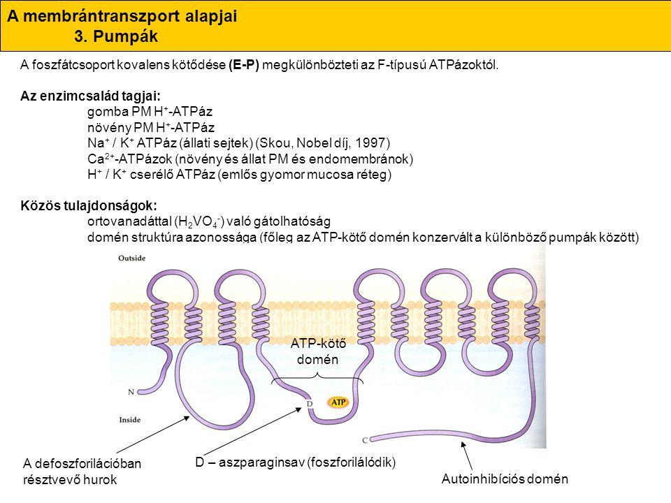 A membrántranszport alapjai 3. Pumpák