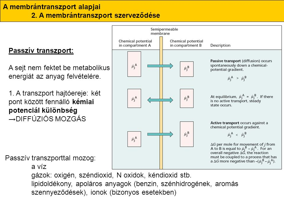 A membrántranszport alapjai