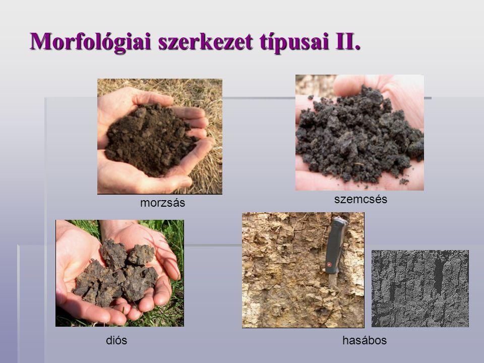 Morfológiai szerkezet típusai II.