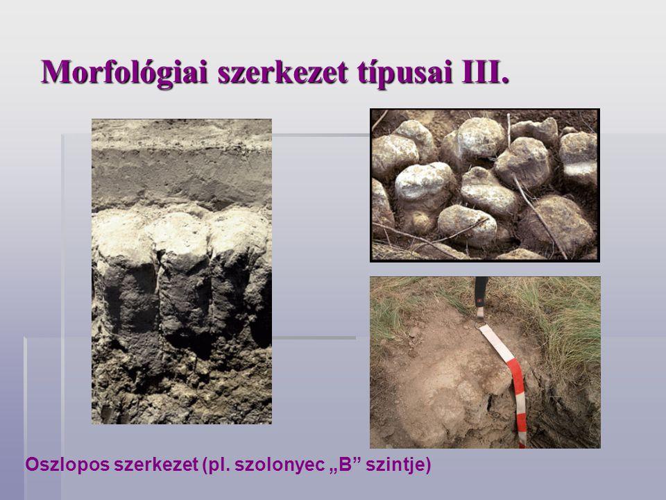 Morfológiai szerkezet típusai III.