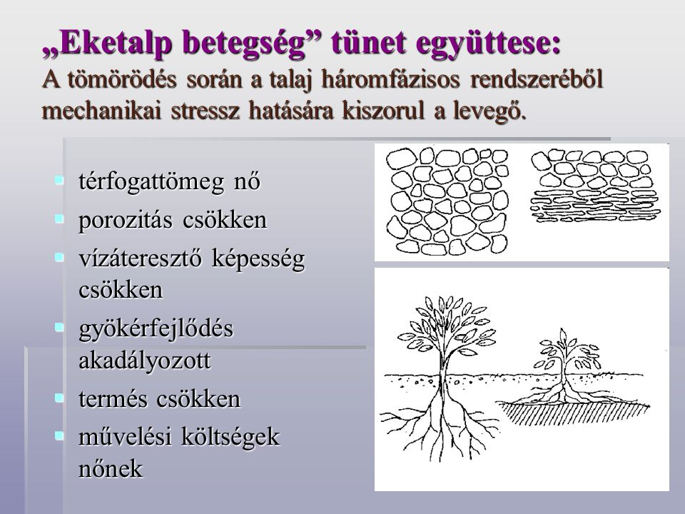 """""""Eketalp betegség tünet együttese: A tömörödés során a talaj háromfázisos rendszeréből mechanikai stressz hatására kiszorul a levegő."""