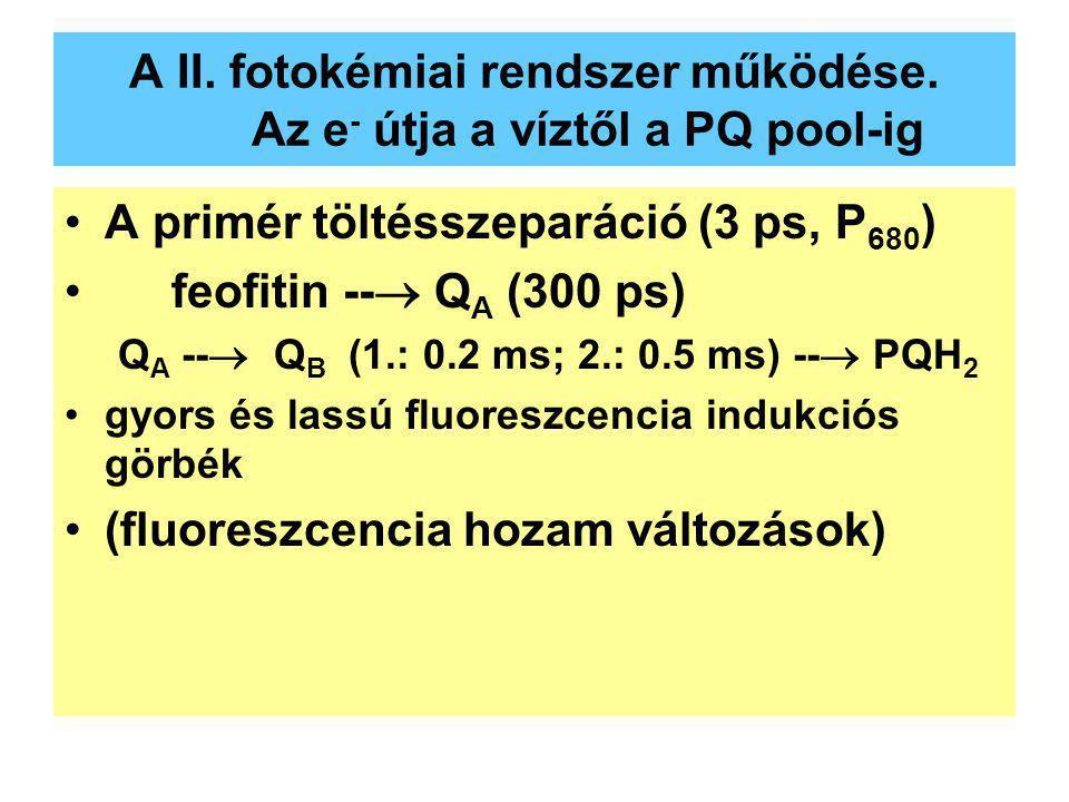 A II. fotokémiai rendszer működése. Az e- útja a víztől a PQ pool-ig