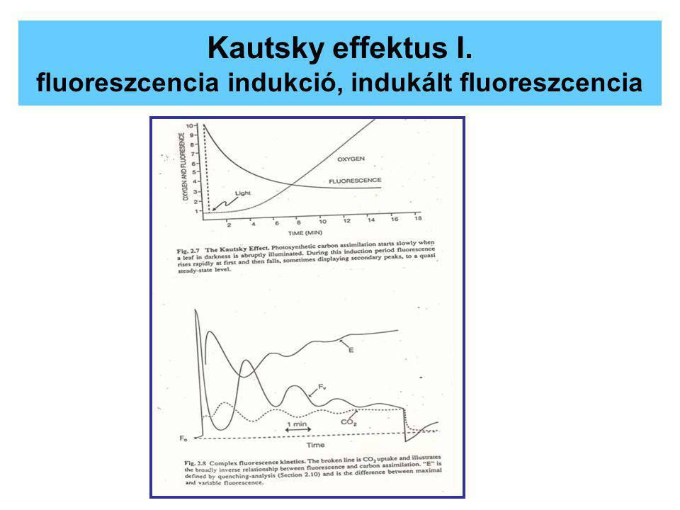 Kautsky effektus I. fluoreszcencia indukció, indukált fluoreszcencia