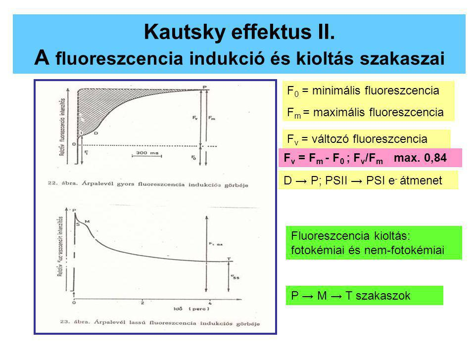 Kautsky effektus II. A fluoreszcencia indukció és kioltás szakaszai
