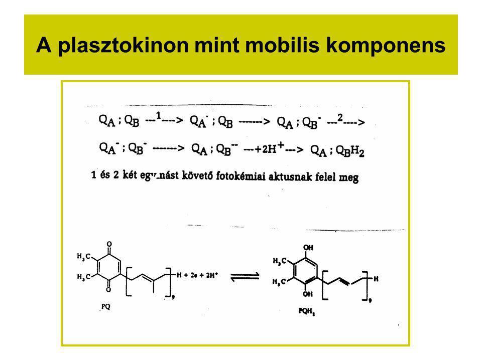 A plasztokinon mint mobilis komponens