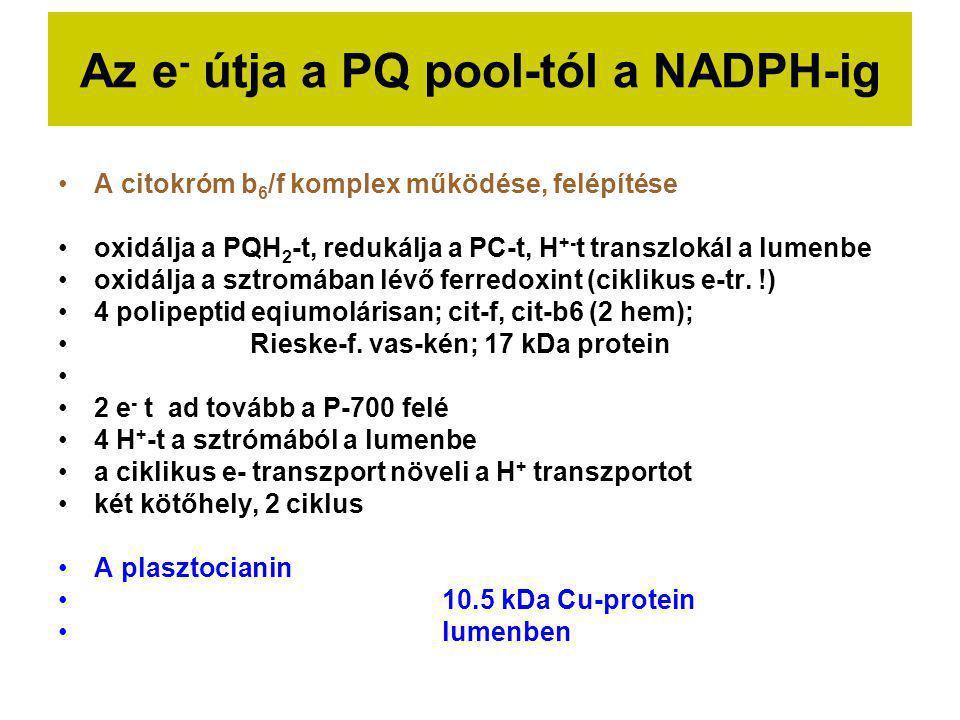 Az e- útja a PQ pool-tól a NADPH-ig