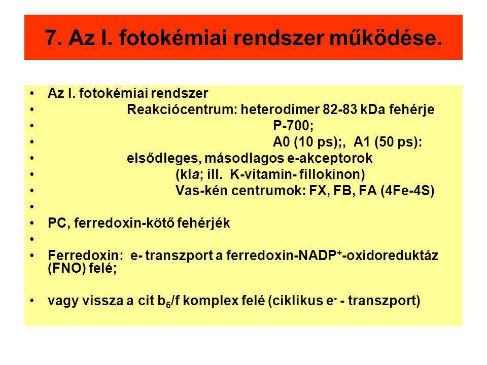 7. Az I. fotokémiai rendszer működése.
