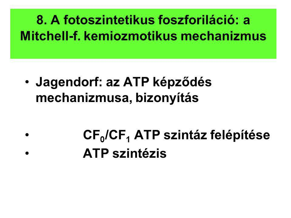 8. A fotoszintetikus foszforiláció: a Mitchell-f