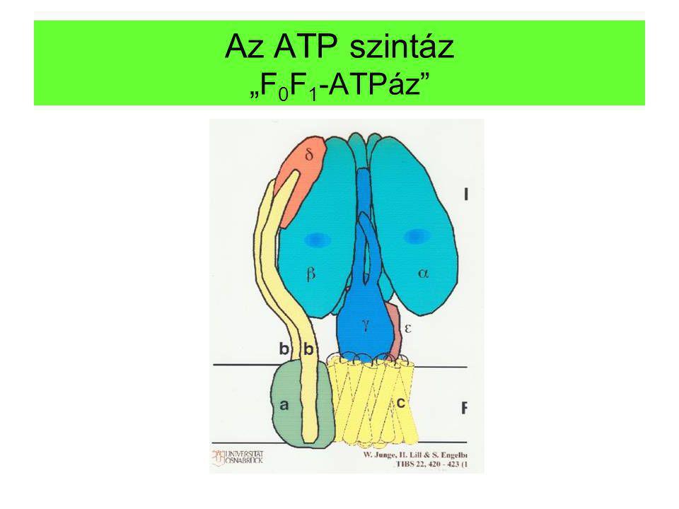 """Az ATP szintáz """"F0F1-ATPáz"""