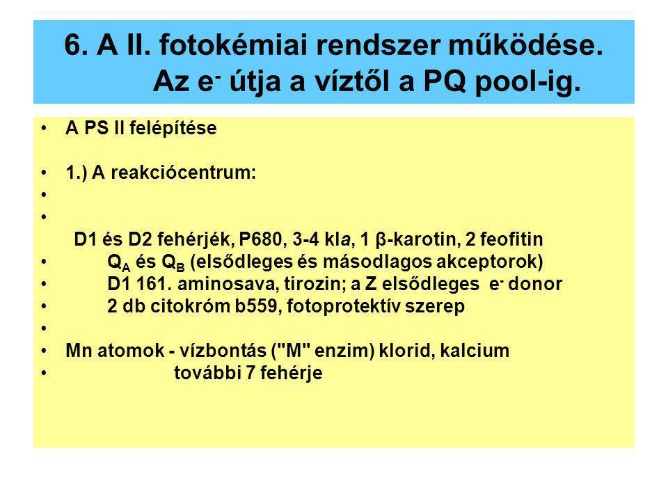 6. A II. fotokémiai rendszer működése. Az e- útja a víztől a PQ pool-ig.