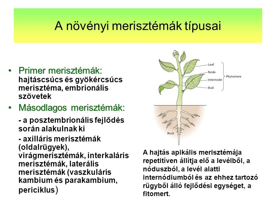 A növényi merisztémák típusai
