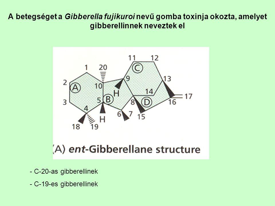 A betegséget a Gibberella fujikuroi nevű gomba toxinja okozta, amelyet gibberellinnek neveztek el