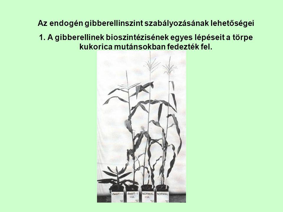 Az endogén gibberellinszint szabályozásának lehetőségei