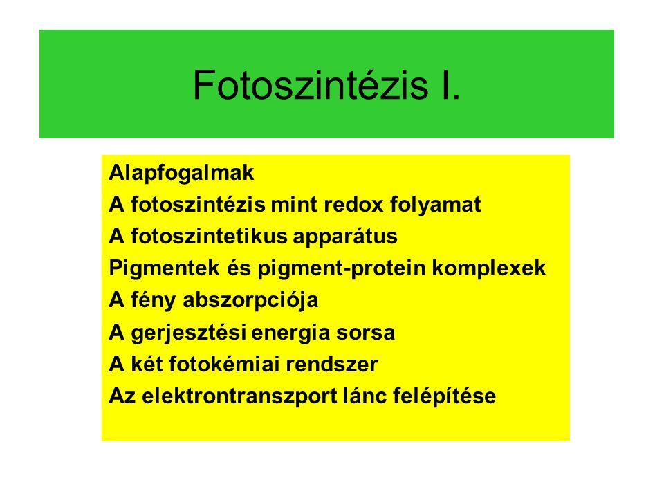 Fotoszintézis I. Alapfogalmak A fotoszintézis mint redox folyamat