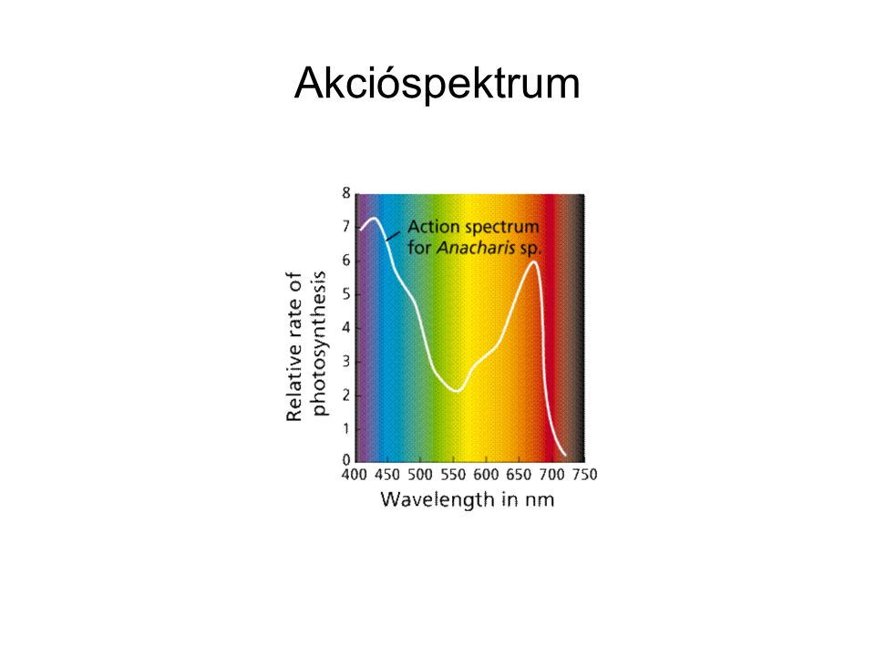 Akcióspektrum