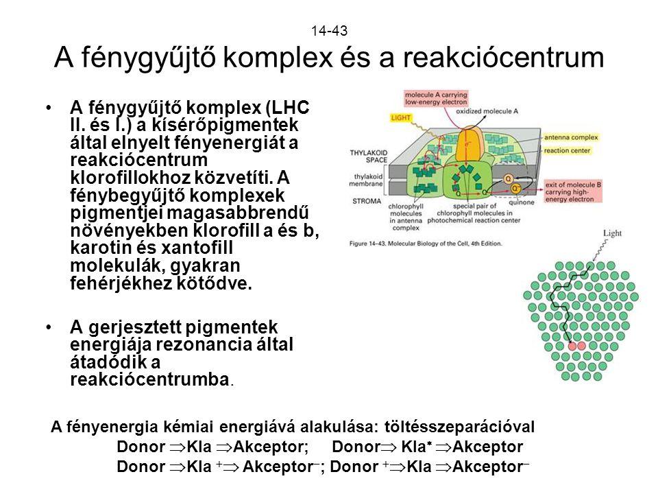 14-43 A fénygyűjtő komplex és a reakciócentrum