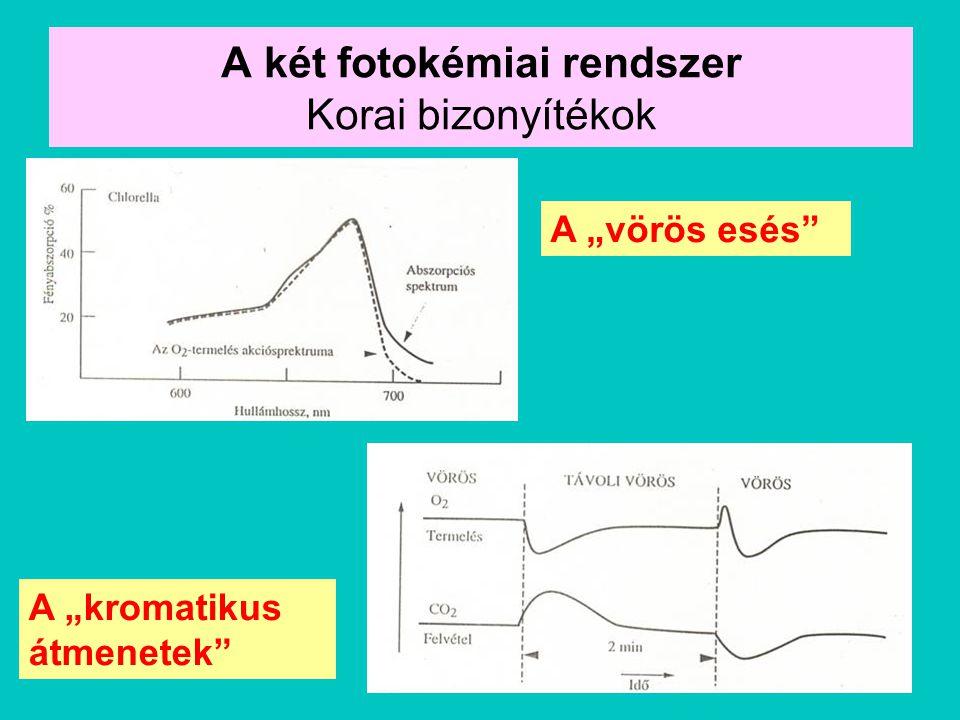 A két fotokémiai rendszer Korai bizonyítékok
