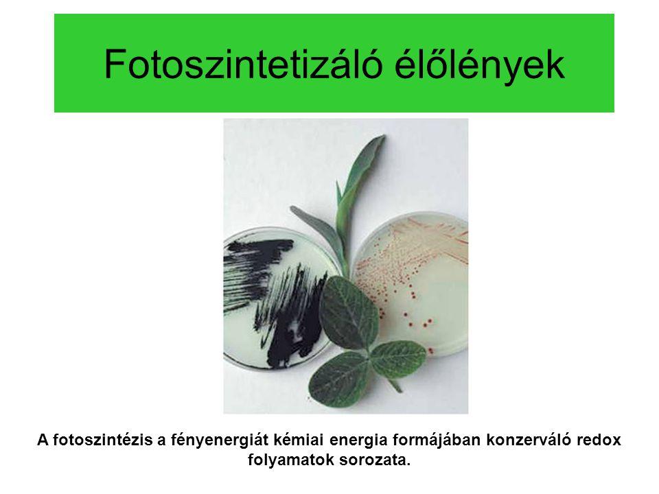 Fotoszintetizáló élőlények