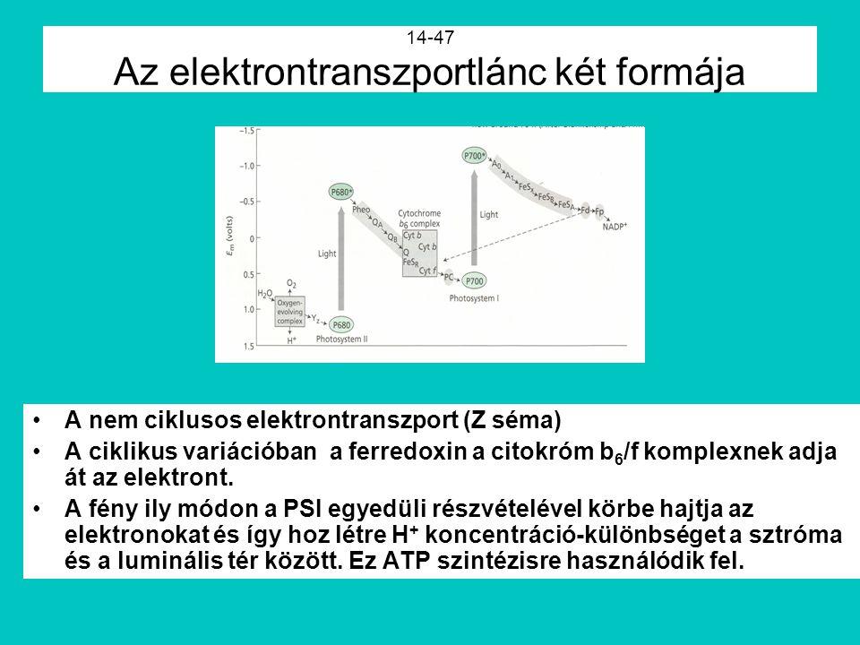 14-47 Az elektrontranszportlánc két formája