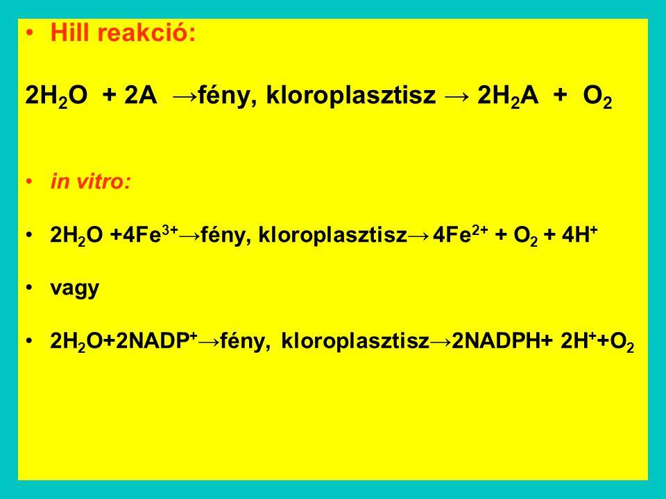 2H2O + 2A →fény, kloroplasztisz → 2H2A + O2