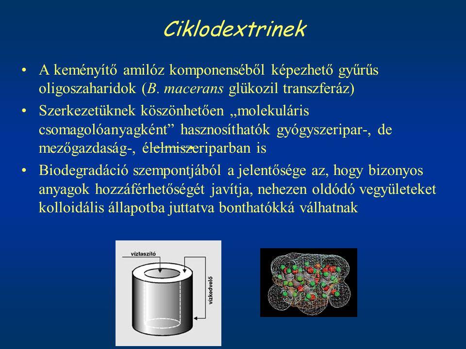 Ciklodextrinek A keményítő amilóz komponenséből képezhető gyűrűs oligoszaharidok (B. macerans glükozil transzferáz)