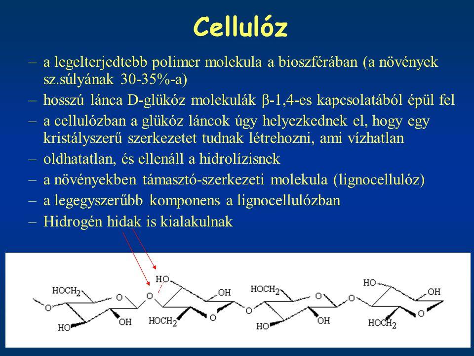 Cellulóz a legelterjedtebb polimer molekula a bioszférában (a növények sz.súlyának 30-35%-a)