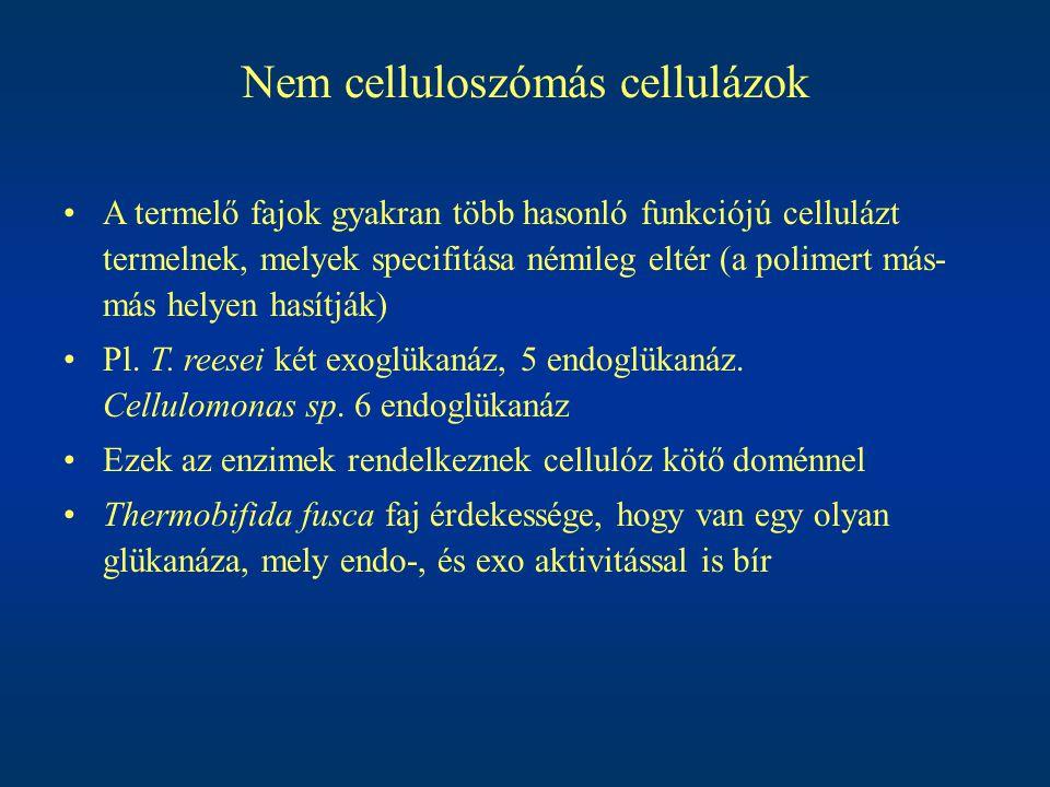 Nem celluloszómás cellulázok