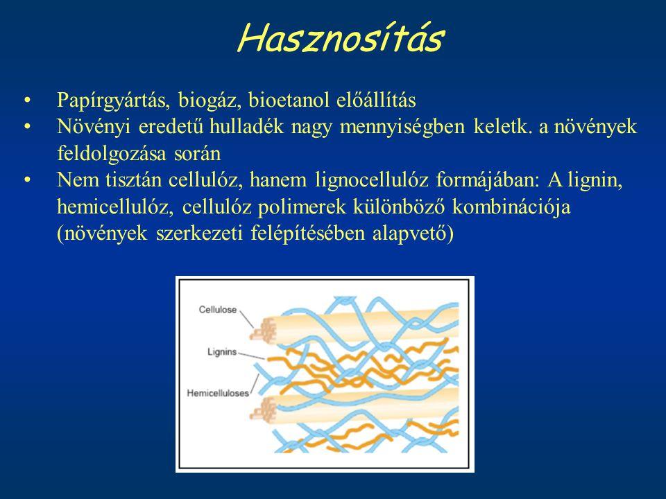 Hasznosítás Papírgyártás, biogáz, bioetanol előállítás