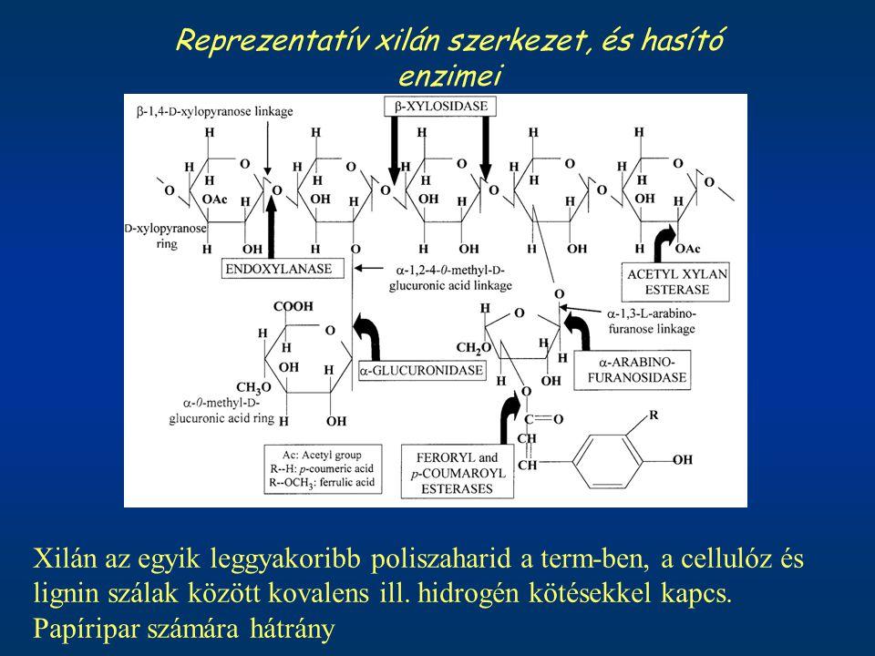 Reprezentatív xilán szerkezet, és hasító enzimei