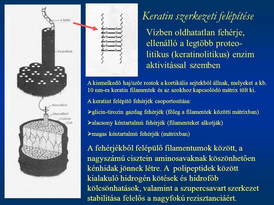 Keratin szerkezeti felépítése