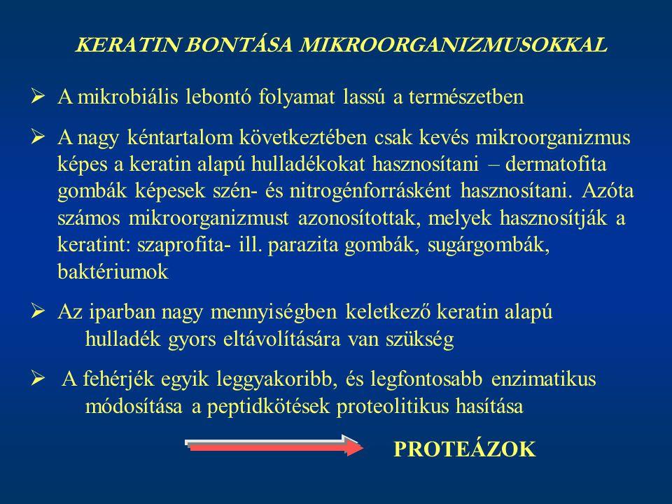 KERATIN BONTÁSA MIKROORGANIZMUSOKKAL