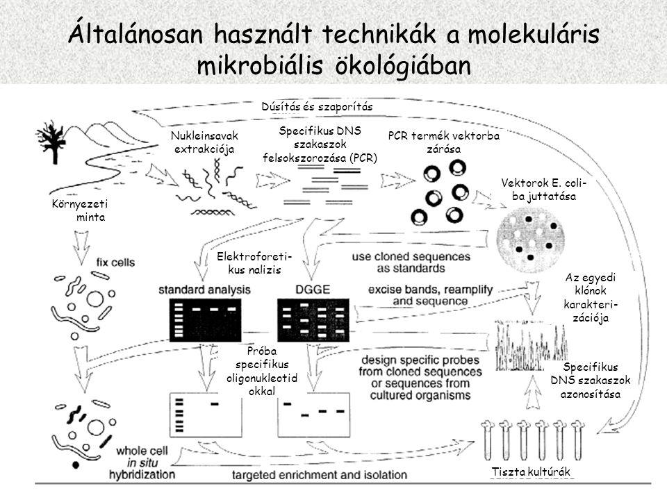 Általánosan használt technikák a molekuláris mikrobiális ökológiában