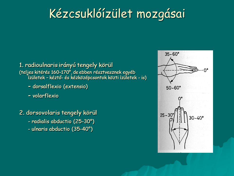Kézcsuklóízület mozgásai