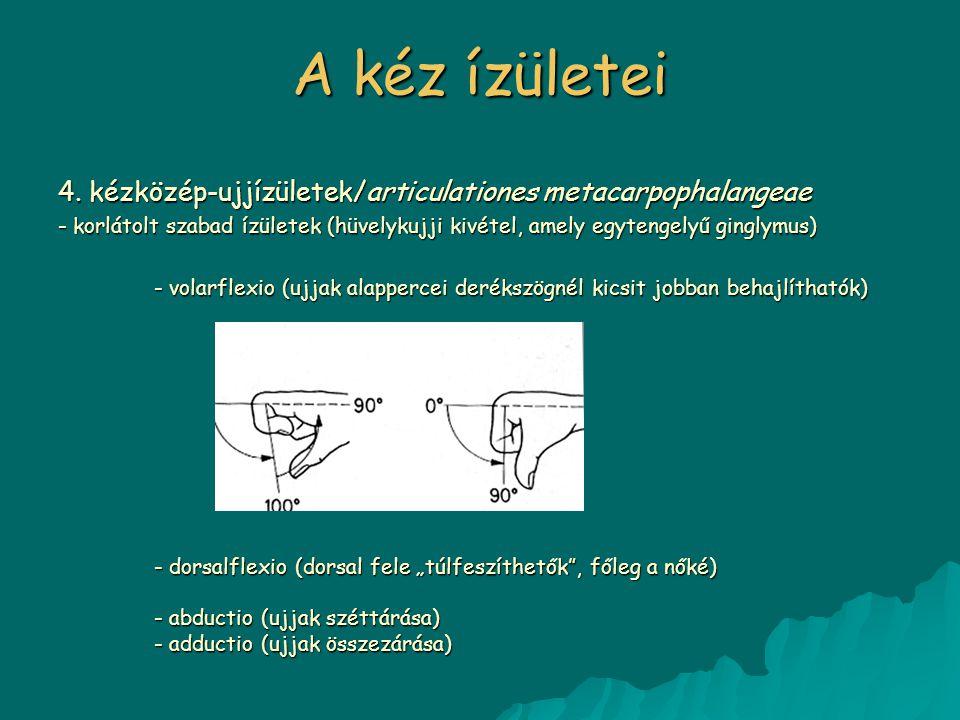 A kéz ízületei 4. kézközép-ujjízületek/articulationes metacarpophalangeae.