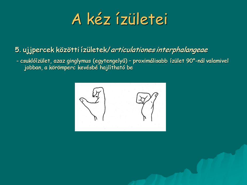 A kéz ízületei 5. ujjpercek közötti ízületek/articulationes interphalangeae.
