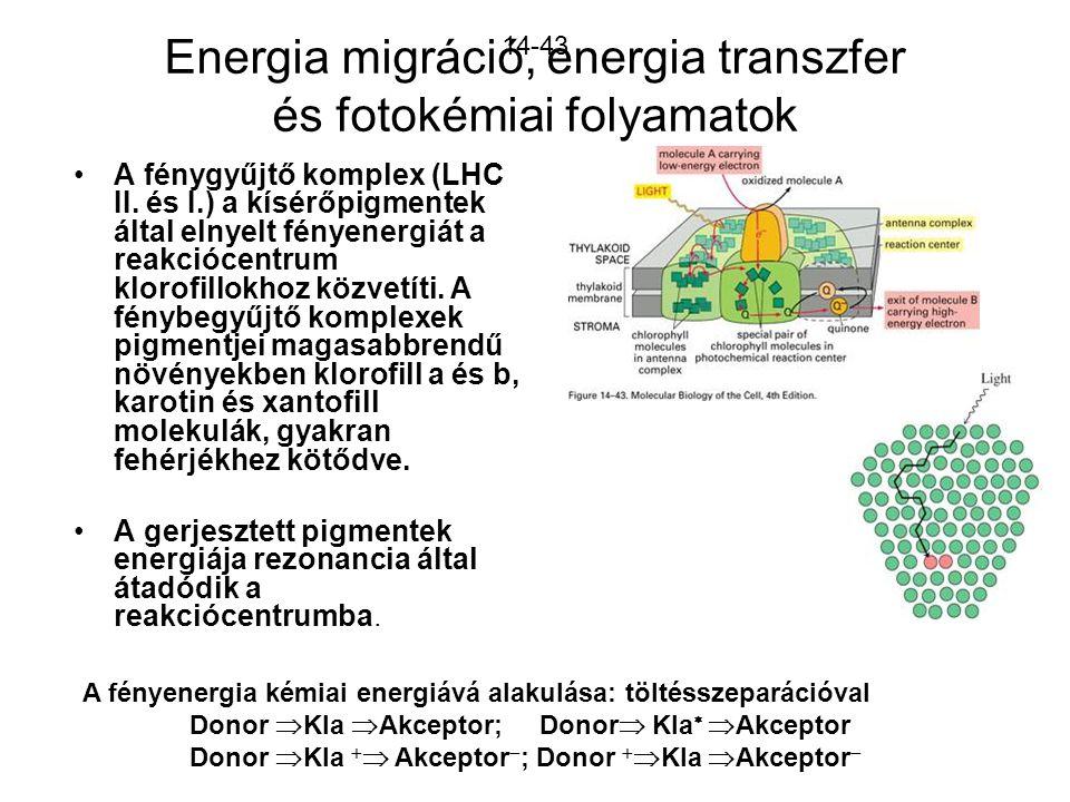 Energia migráció, energia transzfer és fotokémiai folyamatok